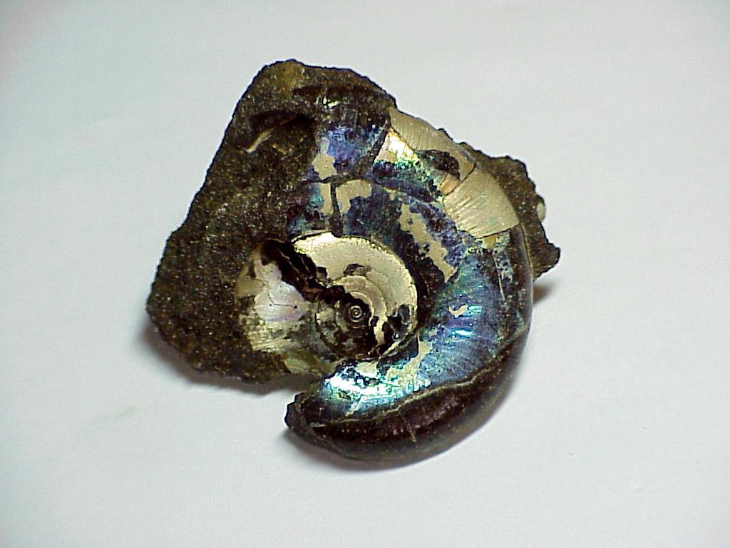 Аммолит или Аммонит  (органика)
